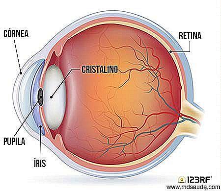 82db9efb6f75 Som allerede nævnt er linsen den naturlige linse i vores øjne. Fordi det er  fleksibelt