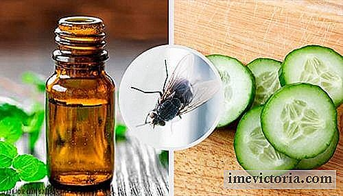 7 Natural Fly Repellents